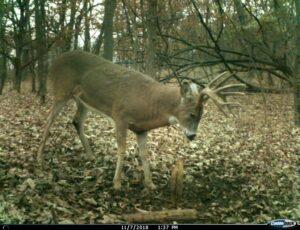 iowa guided whitetail hunts